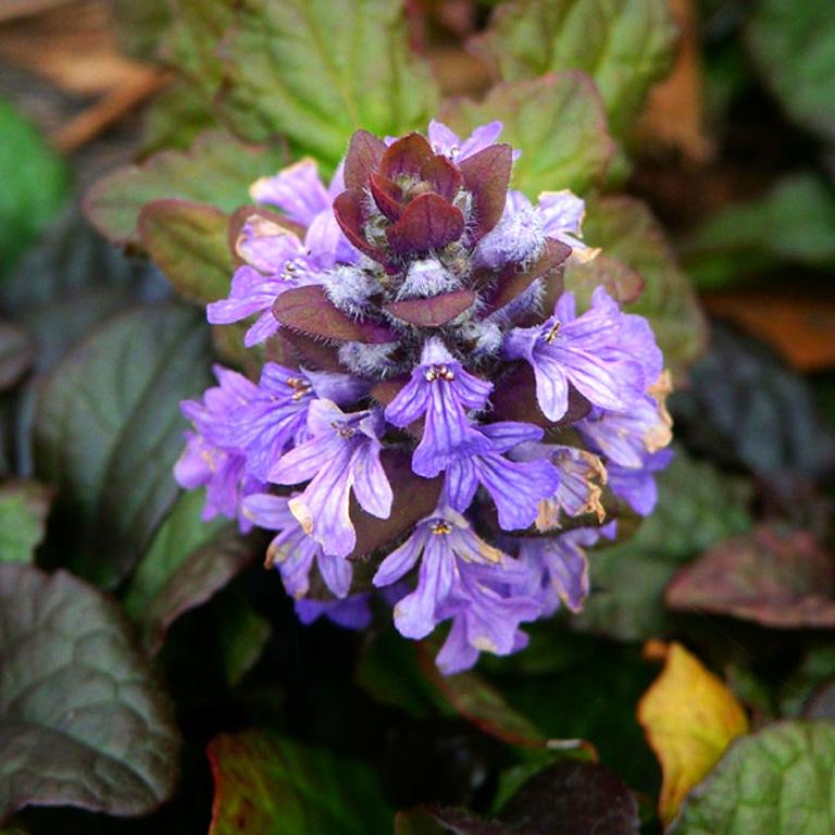 Неприхотливые растения для клумбы