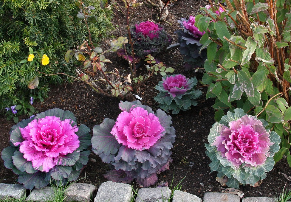 Очень красивые садовые цветы фото