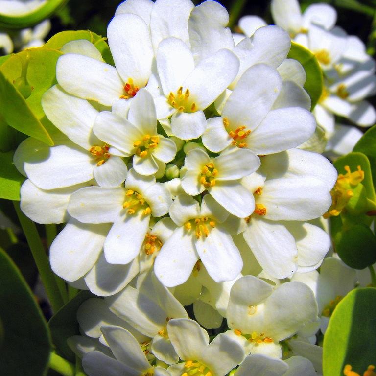 Галерея фотографий цветов для клумбы