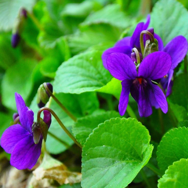 Фото цветов весны, весенняя клумба | Любимые цветы