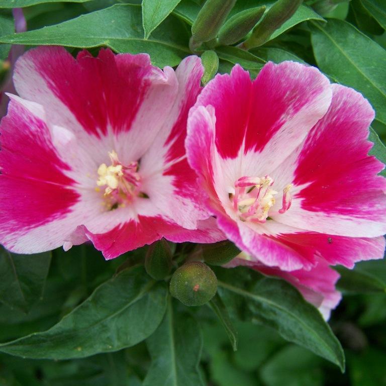 Какие цветы посадить на рассаду
