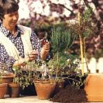 Майские заботы о комнатных растениях