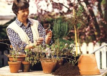 Май для комнатных растений