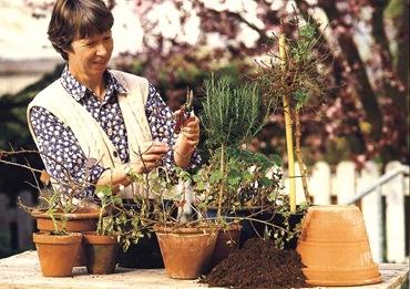 Забота о растениях в мае