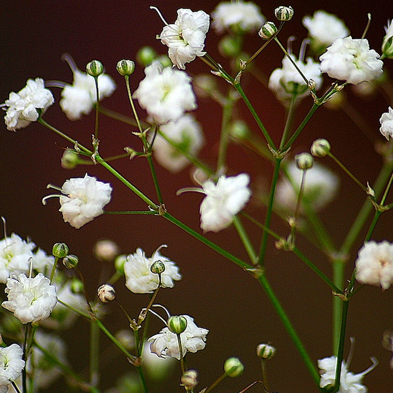 Каталог цветов названия и фото описание цветов виды и
