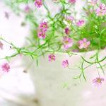 Гипсофила в вазе