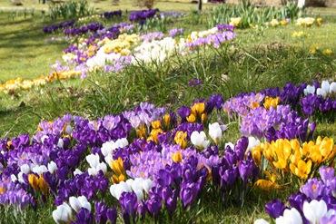 Цветение луковичных и клубневых цветов