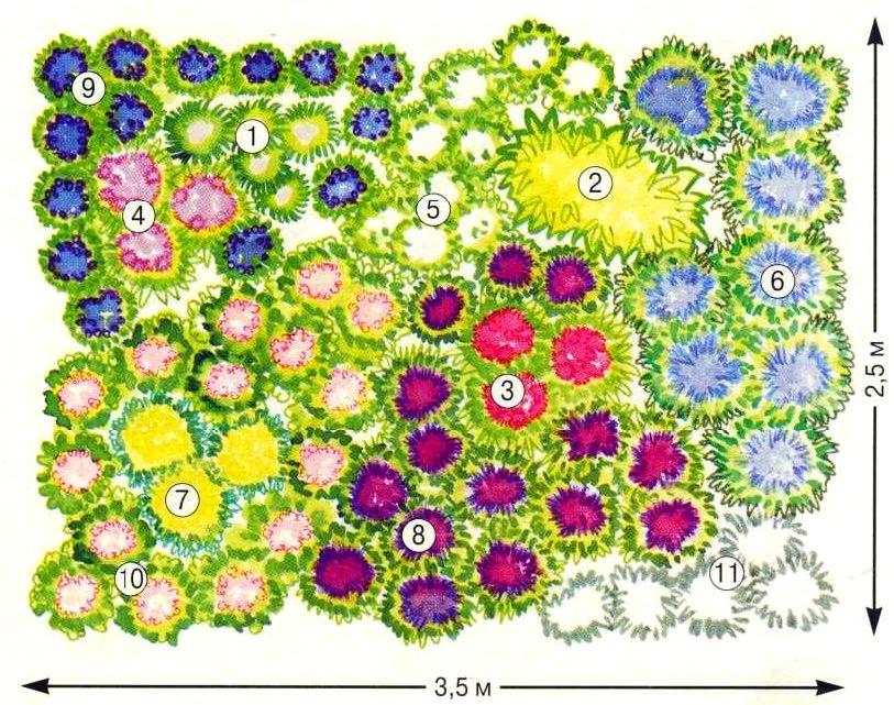 Клумба схема цветника