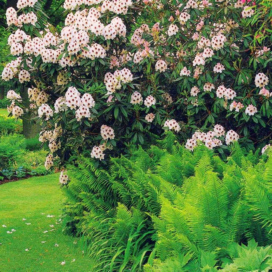 Цветы для кислой почвы