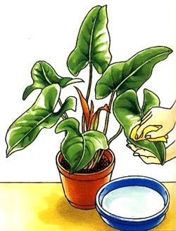 Чистка растений
