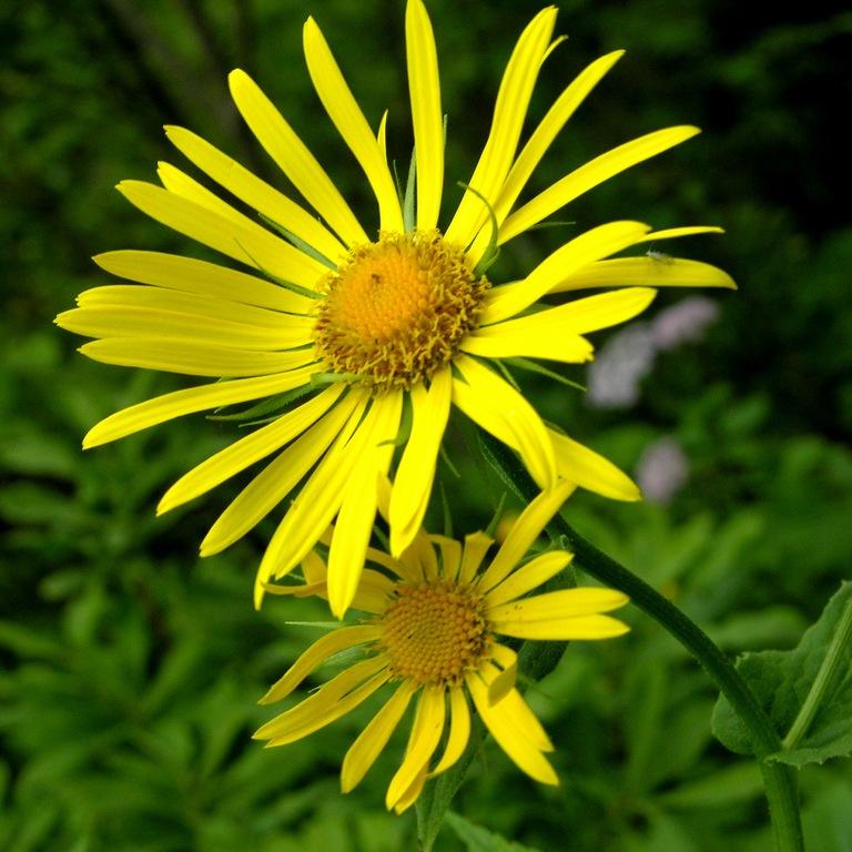 Какие цветы посадить в саду
