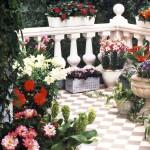 Балконные растения-неженки
