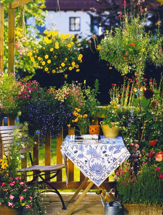 Цветы из семян на балконе