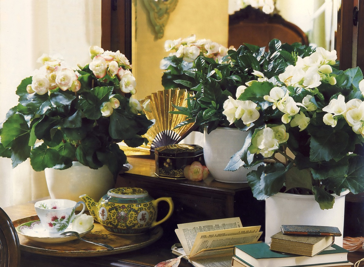 Фото цветов в квартире
