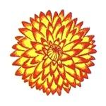 Размер цветка георгины