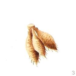 Размножение клубнями