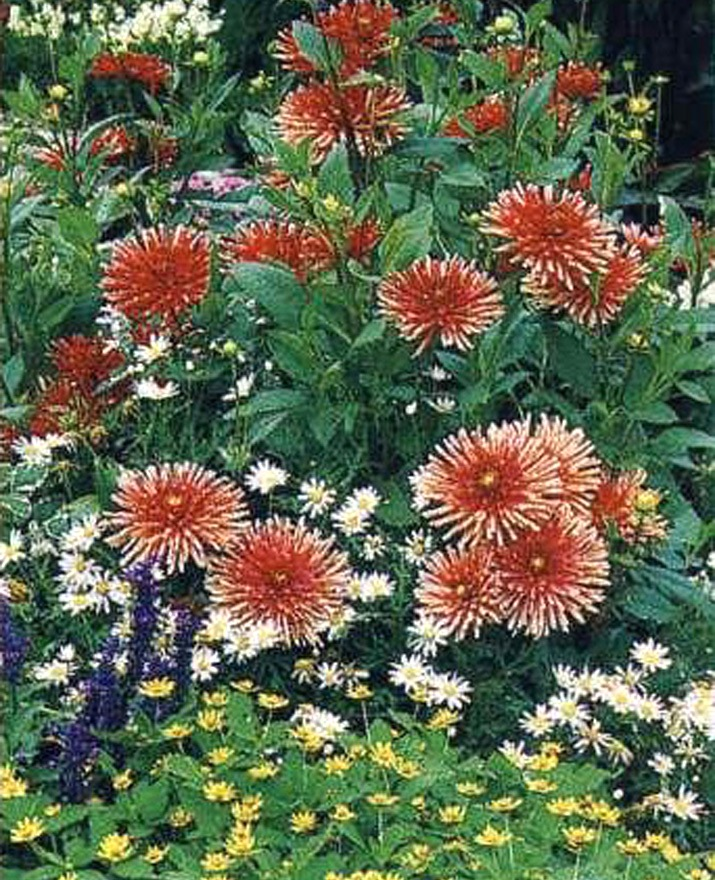Цветы самосевы фото и название