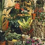 Комнатные растения в июне