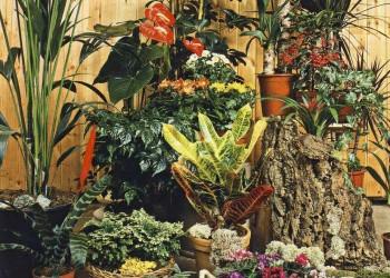 Уход за комнатными цветами в июне
