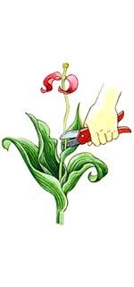 Обрезка тюльпана
