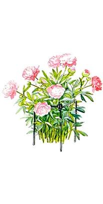 Подвязка цветов