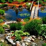 Выбор растений для пруда