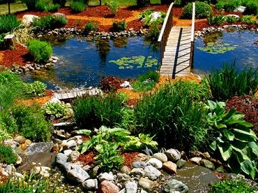 Водные растения для садового пруда