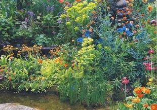 Оформление пруда растениями