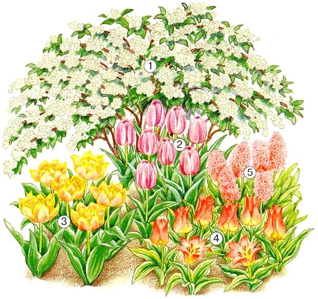 Одна нарисованная клумба с цветами