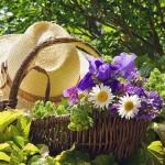 Июнь: работы в саду