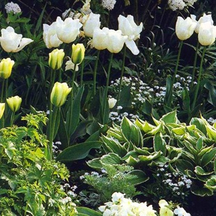 Тюльпаны и функии