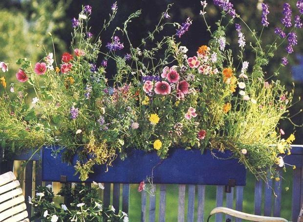 Цветы в балконном ящике