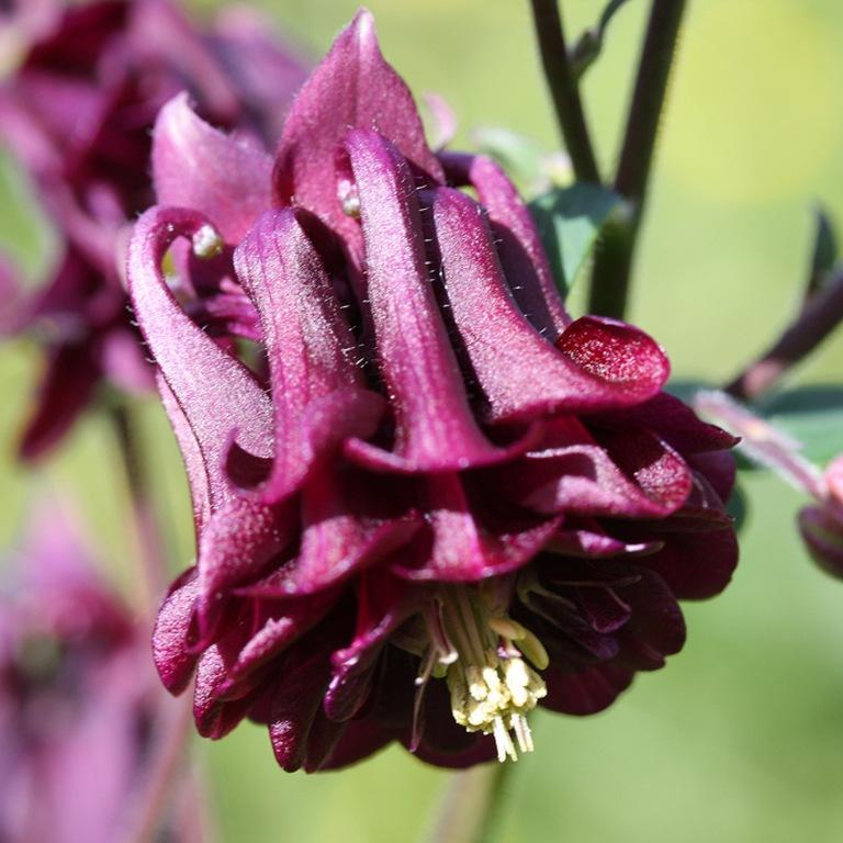 семена цветов в открытый грунт фото