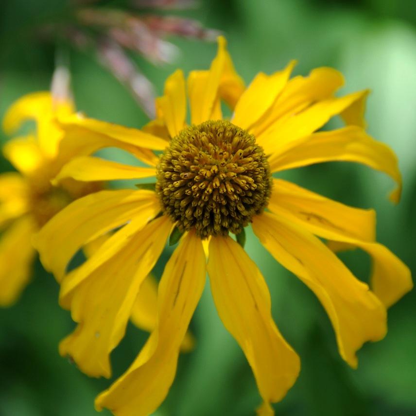 Названия лесных желтых цветов