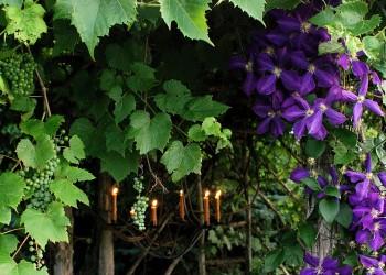 Живые садовые ширмы