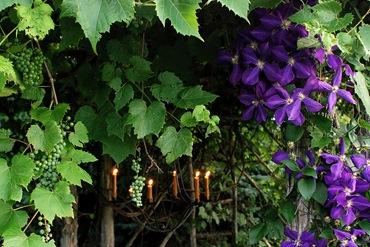 Живые стены из цветов