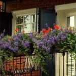 Июль для комнатных и балконных цветов