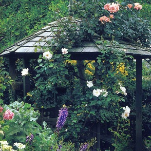 Беседка, увитая розами