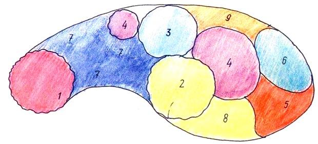 Цветник для тенистого влажного участка - схема