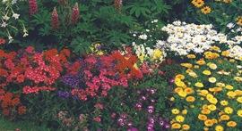 Клумба цветов для срезки