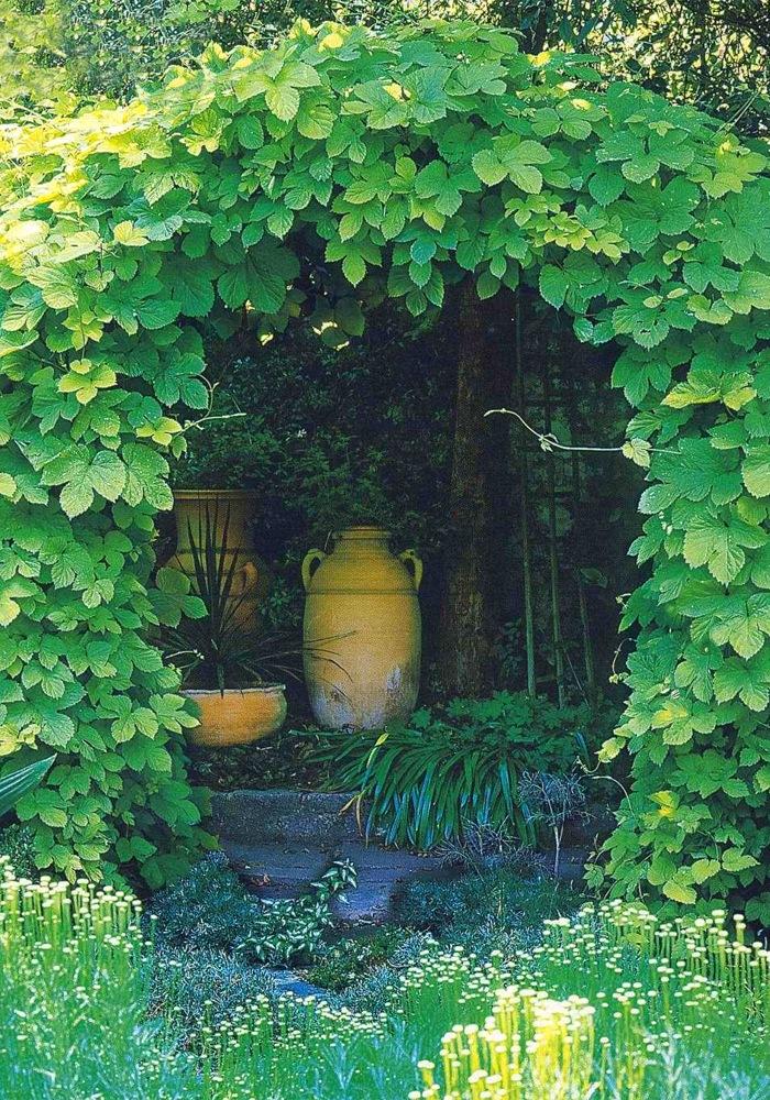 хмель фото в саду
