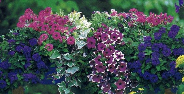Сине-фиолетовая композиция цветов