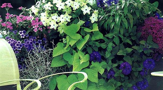 Композиция для цветочного контейнера