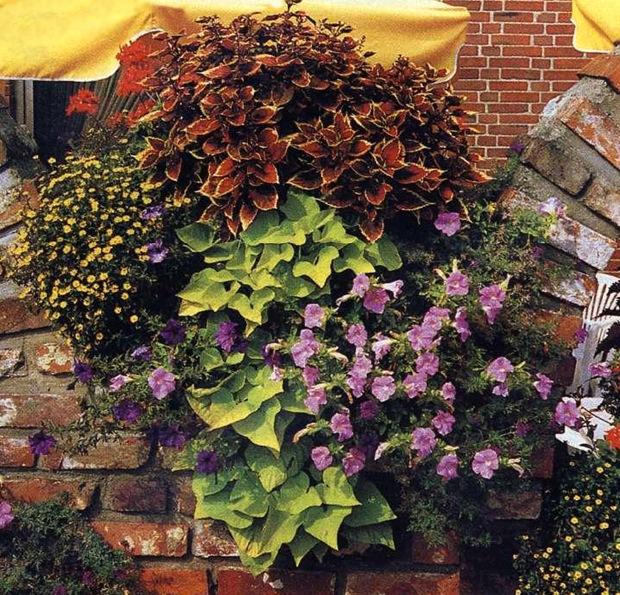 Ампельные растения в ящике на балконе