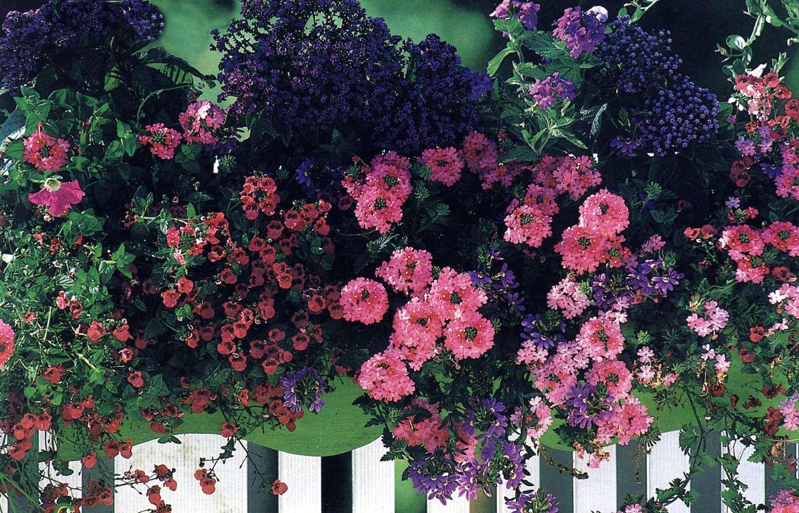 Ящиков схемы посадки любимые цветы