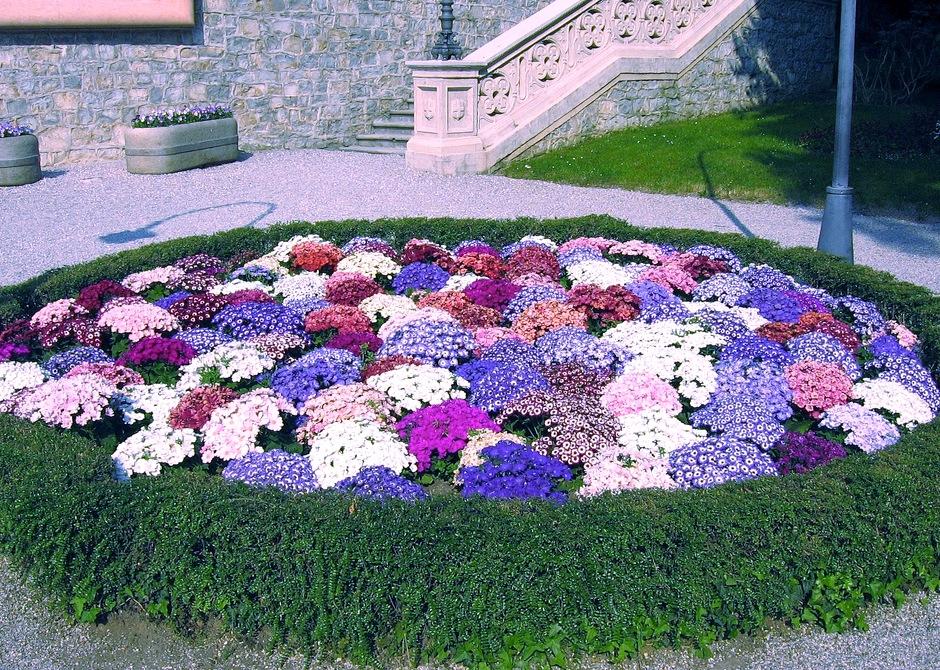 Клумбы из цветов фото своими руками