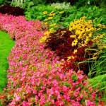 Цветовые сочетания в саду