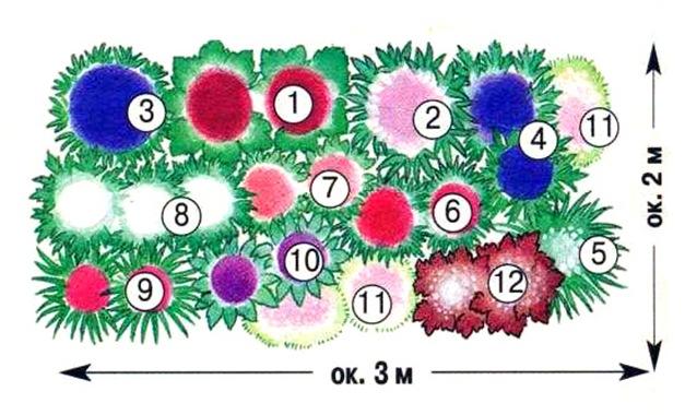 Мы подобрали наиболее привлекательные сорта многолетников для клумбы размером 3 х 2 м. Все лето они будут украшать...