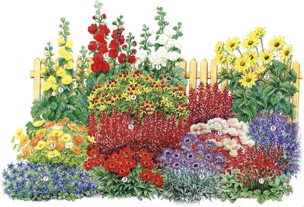 Это схема клумбы многолетников для солнечного места, которая порадует вас живописным цветением уже в первый год.