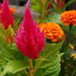 Сладкие парочки для вашего сада
